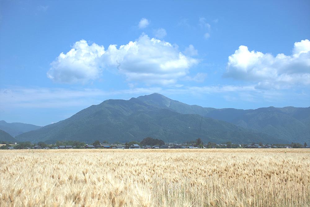 大麦と荒島岳